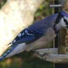 Build a Rotating Feeder for Perfect Bird Pictures