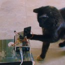 Nvidia Jetson TX1 Cat Spotter and Laser Teaser