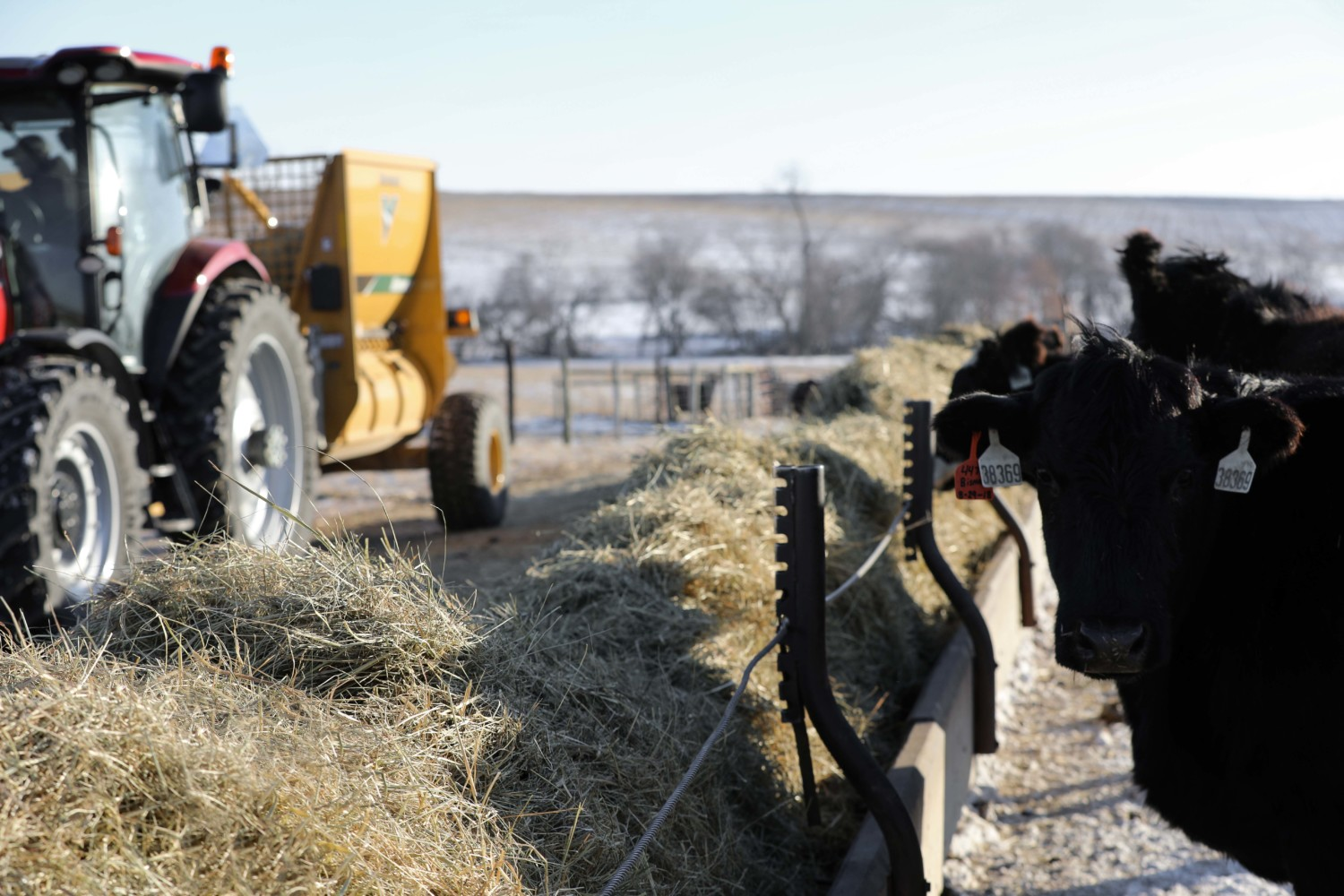 Feed Hay Stop Hay Waste With The Right Feed Management Makin Hay