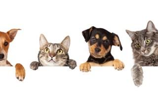 Immobilie-mieten-mit-hund-und-katze