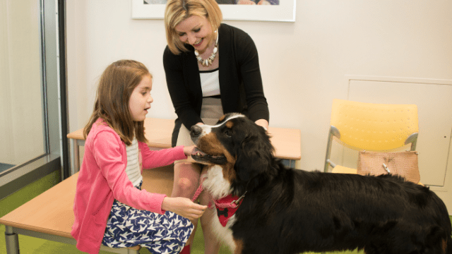 Future of Pet Therapy in Hospitals