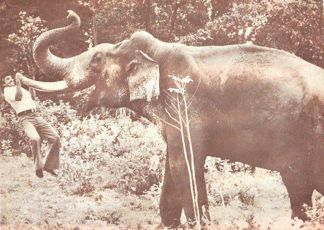 അമ്മ പെങ്ങന്മാരും   ആങ്ങളമാരും അഥവാ കേരളീയാണത്തങ്ങളുടെ ഒതേനന് കോംപ്ലക്സ്