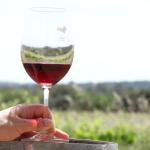 Éxito de la II edición de Wine days Mallorca