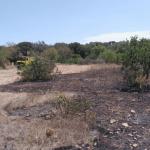 Extinguidos dos incendios forestales en Artà y Sant Francesc