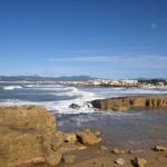 EMAYA ha retirado 1100 toneladas de posidonia de Cala Gamba