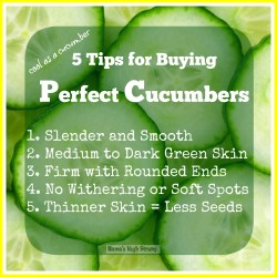 Small Of When To Pick Cucumbers