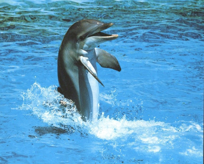 Cute Baby Dolphin Wallpaper Dauphins Page 6