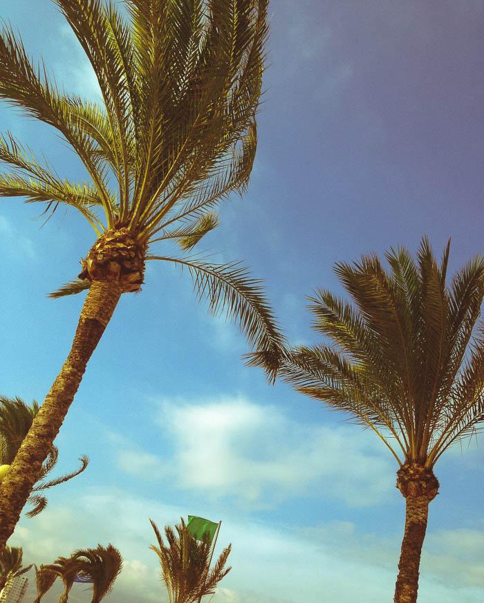 palms at albir beach