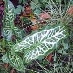 Winter plants