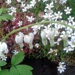 Shady garden? Best plants to choose