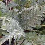 Big-leaved plants