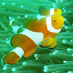 canyons reef dive sites subic bay