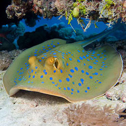 runway reef dive sites subic bay