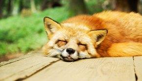 besserschlafen
