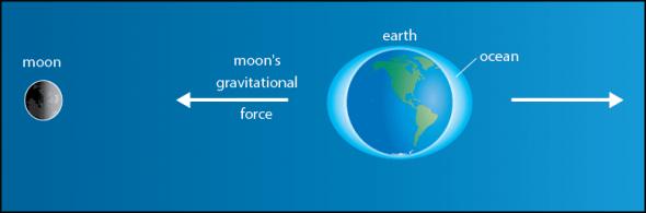 Tide Formation—Gravitational Pull | manoa.hawaii.edu/ExploringOurFluidEarth