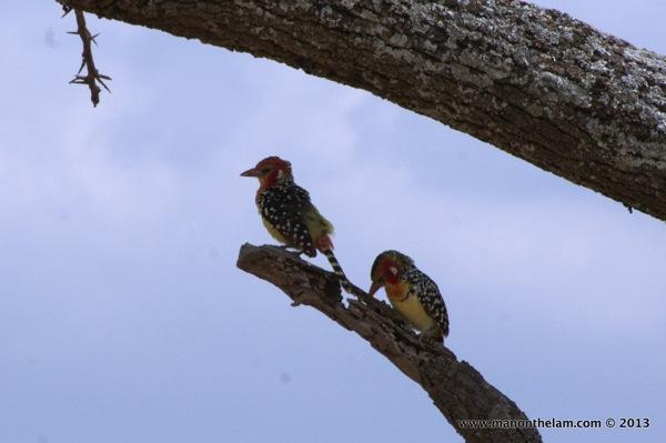 Tarangire National Park Tanzania 243