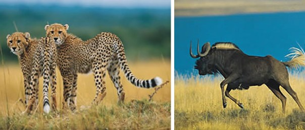 Vida selvagem na África do Sul