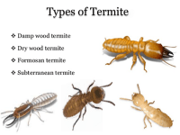 How To Get Rid Of Termites | Better Life