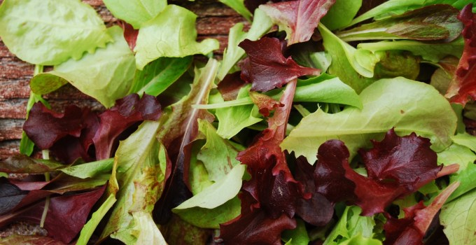 Featured Product: Kingfisher Farm's Gourmet Organic Greens