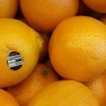 Delicious Heirloom Oranges