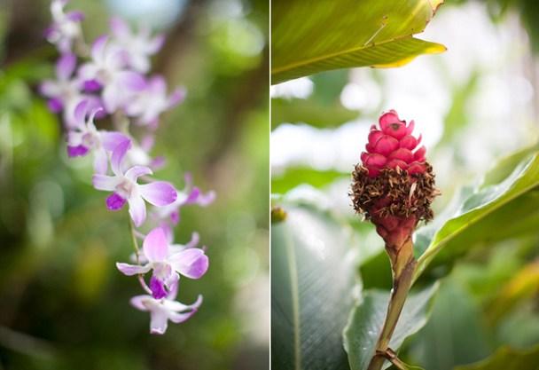 Nevis Gardens