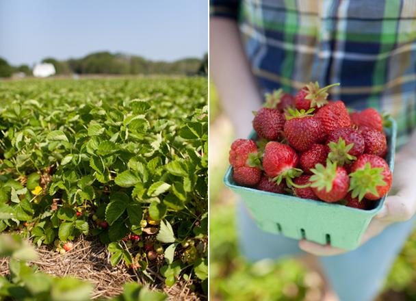 Maxwell's Farm Strawberries