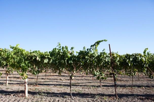 Copain Winery