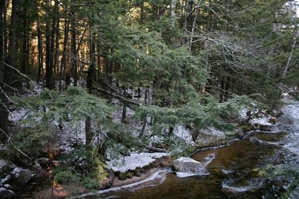 Hemenway State Forest