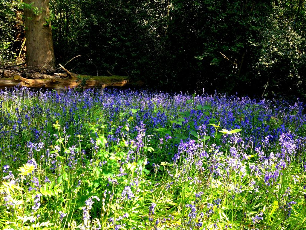 4 amazing National Trust properties to visit near London - Petts Wood & Hawkwood, Kent, England