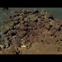 Baji -Theatrical Trailer