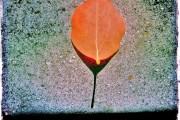 Leaf Dial