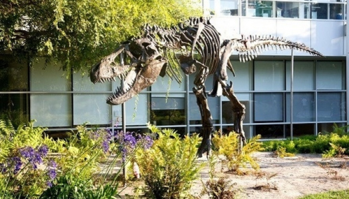 google-dinosaur