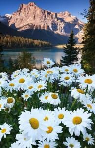 Lago Emerald - Columbia Britânica, Canadá - Reprodução