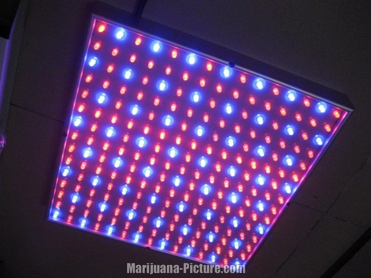 Led Lichtspektrum Lights Led Light Spectrum Jpg