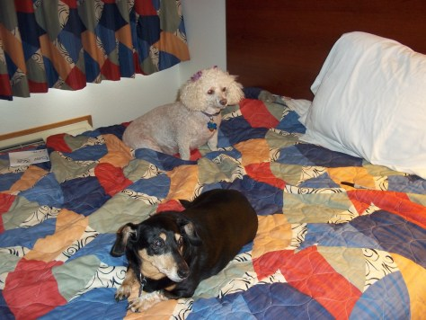 Lucy and Lily waiting for us to get ready for a day of visiting Hilda at the nursing home.