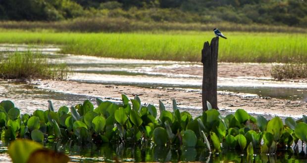 Globo Natureza - Pantanal dos Marimbus