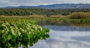 Jornal Hoje - Pantanal em pleno sertão