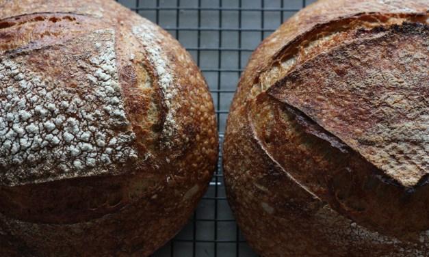 The Basics: Yeast