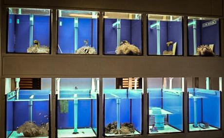 Set Up Fish Breeding Room