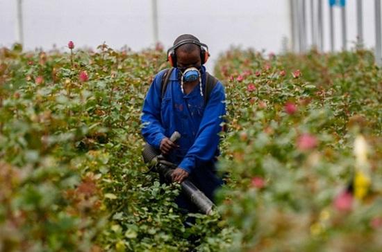 Bioinnovate-pesticide