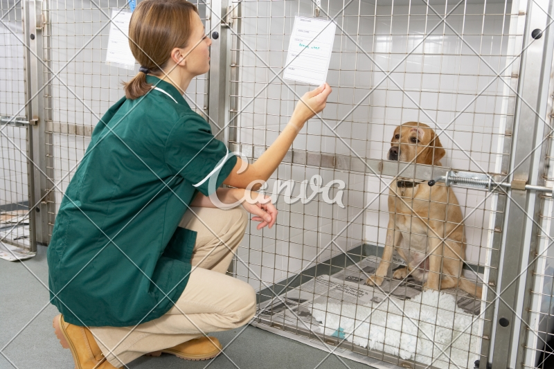 Veterinary Nurse Checking Sick Animals in Pens - Photos by Canva