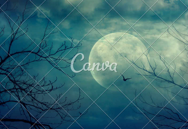 Spooky Forest Halloween Background - Photos by Canva