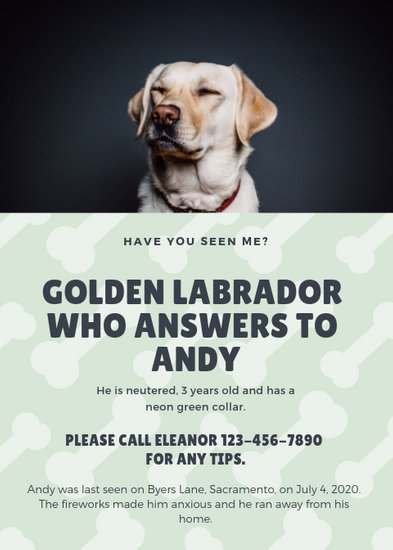 Pale Green Polaroid Frame Lost Dog Flyer - Templates by Canva