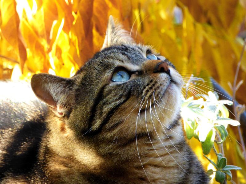 Fall Kitten Wallpaper Cat Tabby Kitty Autumn Leaves Feline Kitten Photos