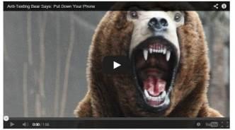 The Anti-texting bear