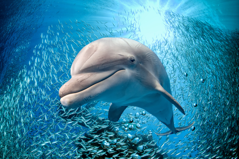 7 Ways to Help Dolphins
