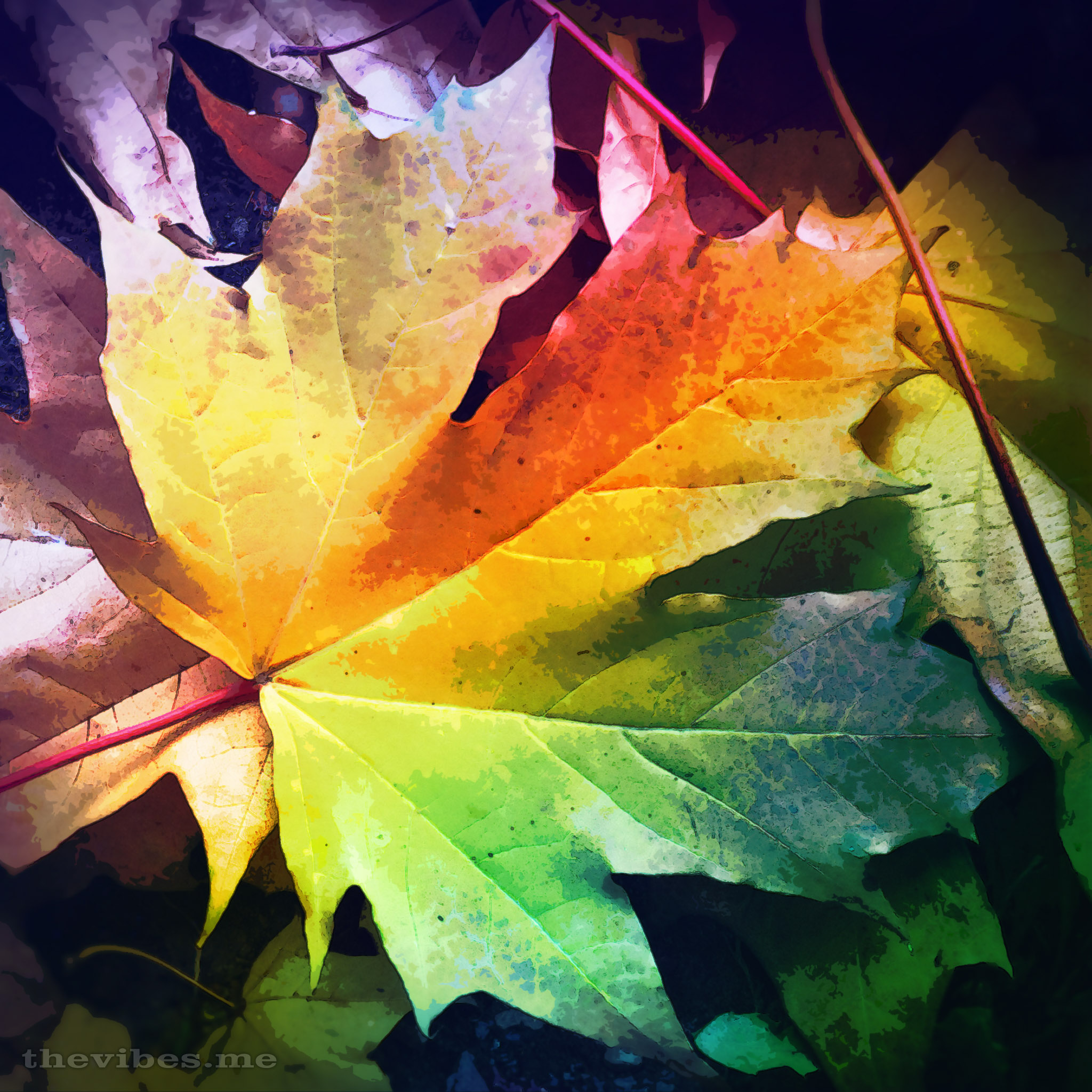 Fall Leaves Dancing Wallpaper Autumn Leaf The Vibes