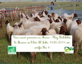 Aid El Adha: Achetez votre mouton certifié BIO et économisez 14% sur le prix régulier!