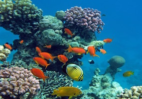 Caire Sharm el Sheikh Spécial édition
