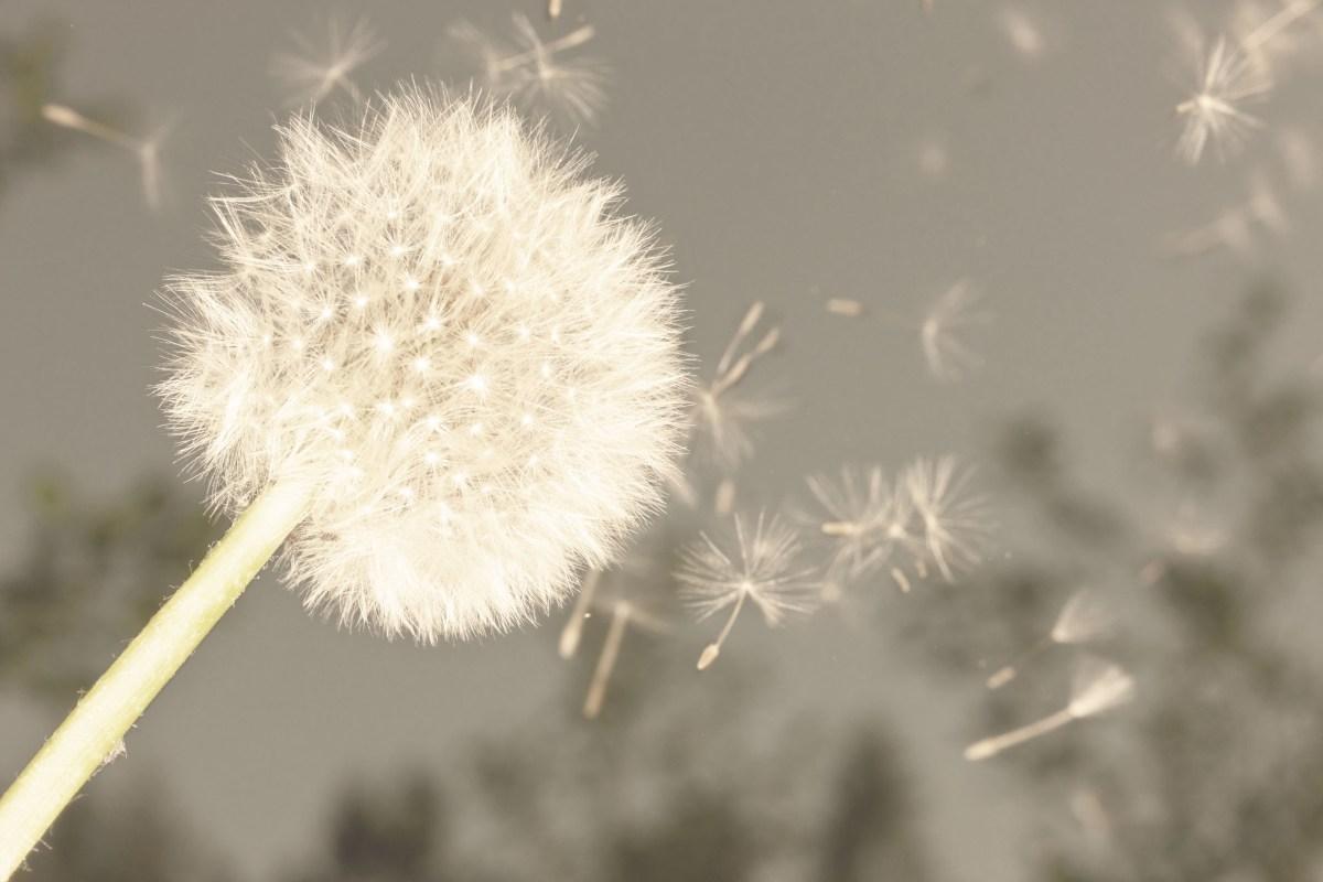 Flying Seeds
